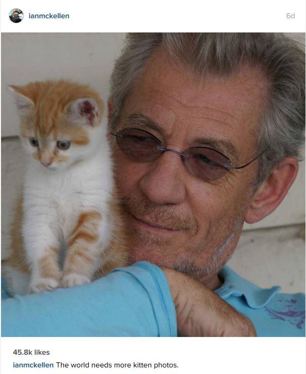 IanMcKellan kitten