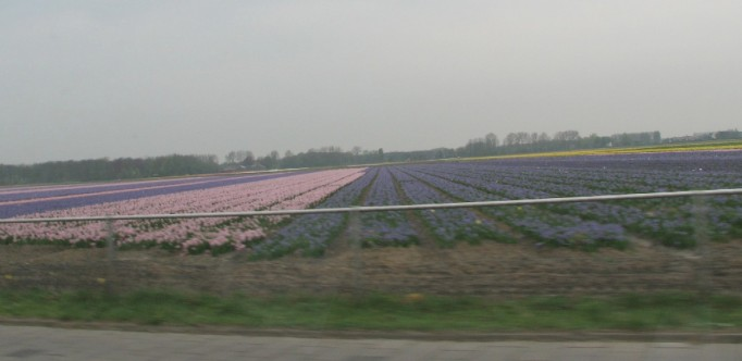 0-1 Flower fields IMG_5308