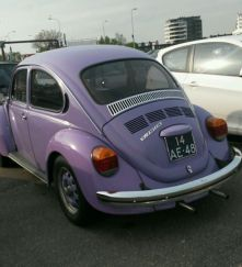Beetle purple