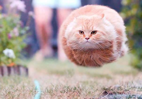 flying-cat