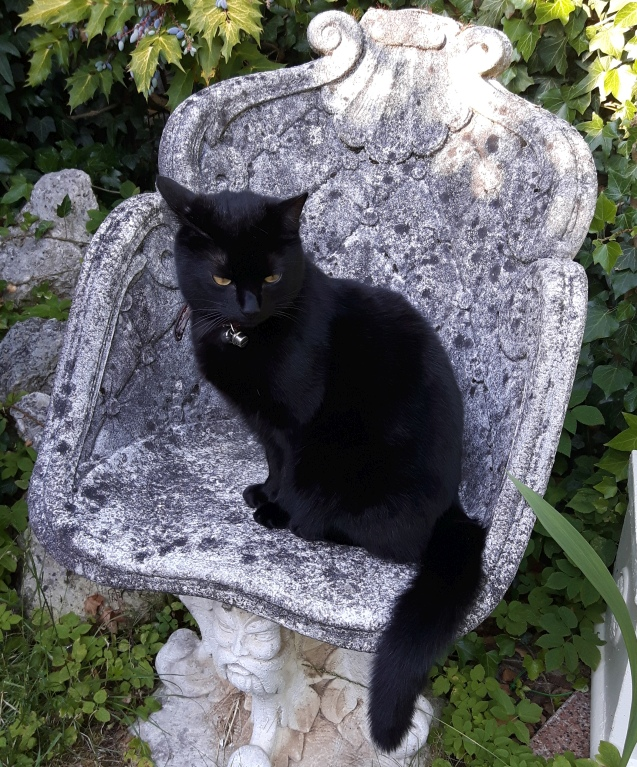 Cat on a stone chair