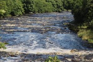 Aysgarth Falls (3)