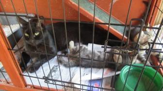 Kali-cat (17)