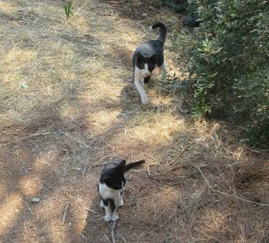 Kali-cat (35)