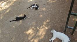 Kali-cat (4)