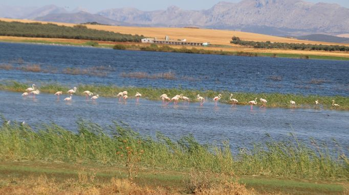 06 Flamingos (3)